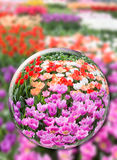 Glass sphere with various tulips in flowers field Royalty Free Stock Photo