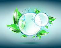 Glass spheres with floral elements Stock Images