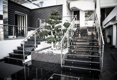 Glass staircase and decorative tree in the modern interior. Tone Stock Photography