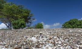 Glass strand i Hawaii Arkivfoton