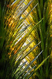 Glass and sunlight. Abstract of green, yellow and clear textured glass with sunlight shining through Stock Photo