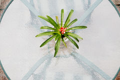Glass table top with plant Stock Photo