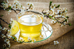Glass tea cup cherry blossoms. Royalty Free Stock Photos