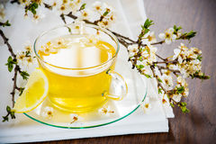 Glass tea cup cherry blossoms. Royalty Free Stock Image
