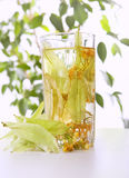 Glass of tea and linden flowers. On light background Stock Image