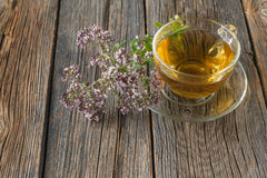 Glass of tea and oregano herb Royalty Free Stock Image