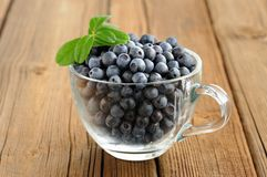 Glass teacup full of fresh wild blueberries with green spring on Royalty Free Stock Photo