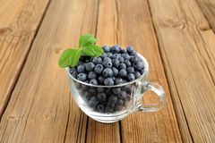 Glass teacup full of fresh wild blueberries with green spring on Royalty Free Stock Image