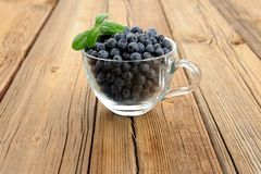 Glass teacup full of fresh wild blueberries with green spring on Royalty Free Stock Photos