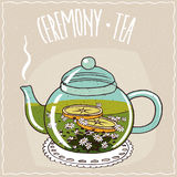 Glass teapot with chamomile tea Royalty Free Stock Photography