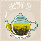 Glass teapot with tea with thyme Stock Image