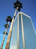 A Glass Tower and Four Palm Trees Royalty Free Stock Images