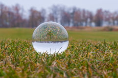 Glass transparent ball on green grass and park Stock Images