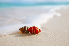 Glass tropical sea  shell with waves under sun light Royalty Free Stock Photos