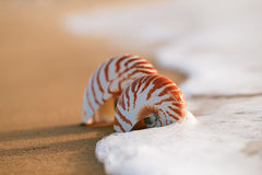 Glass tropical sea  shell with waves under sunrise sun light Stock Photos