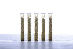Glass tubes with homeopathy globules Stock Image