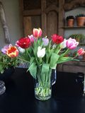 A glass of tulips. A group of multi colored tulips in a vase with a country background Stock Image