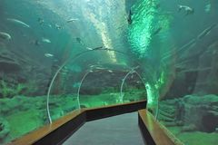 Glass tunnel in the aquarium. Overlooking the underwater world with fish stock images
