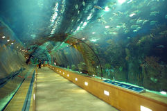 Glass tunnel under sea Stock Photography