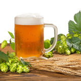 Glass of unfiltered beer with hops and barley Royalty Free Stock Photos