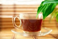 glass växt- tea för kopp Arkivbild