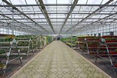 Glass växthus Arkivbilder