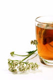 Glass of valerian tea. Herbal tea with teabag in a glass and valerian on white background Stock Photography