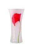 Glass vas med en blomma isolerat Arkivbilder