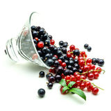 Glass vase with black and red currant on white background stock photo