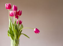Glass vase with bunch of pink tulips. With wall behind Stock Image
