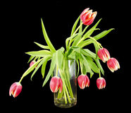Glass vase with a bundle of tulips Stock Photos