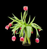 Glass vase with a bundle of tulips Royalty Free Stock Photo