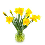 Glass vase with daffodils Royalty Free Stock Photo