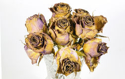 Glass Vase of Eight Dying Mauve Roses Stock Photography
