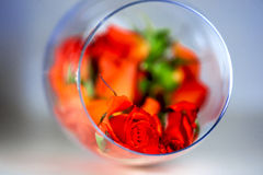 Glass vase filled with red rose petals. Aromatherapy concept. Stock Image