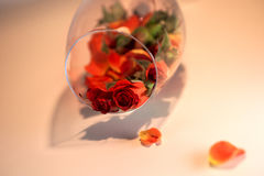 Glass vase filled with red rose petals. Aromatherapy concept. Royalty Free Stock Photography