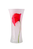 Glass vase with a flower. Isolated. Glass vase with a flower on a white background. It is isolated, the worker of paths is present Stock Images