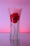 Glass vase with a flower Royalty Free Stock Photos