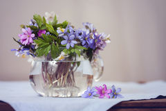 Glass vase with fresh spring forest flowers Royalty Free Stock Photography