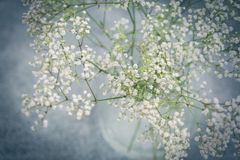 Glass vase of fresh white Babies Breath flowers. Glass vase of fresh dainty small white Babies Breath flowers viewed from above with a heavy vignette royalty free stock photo