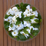 Glass vase with gardenia flowers Stock Images