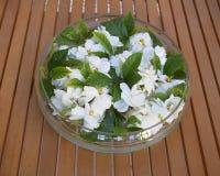 Glass vase with gardenia flowers Stock Photo