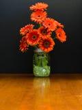 Glass Vase Holds Burnt Orange Daisies Royalty Free Stock Image