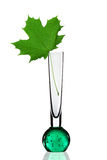 Glass vase with maple leaf Stock Photos