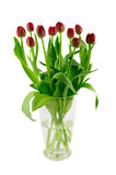 Glass vase with red tulips Royalty Free Stock Photography