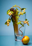 Glass vase with yellow flowers and fruit on blue Stock Photo