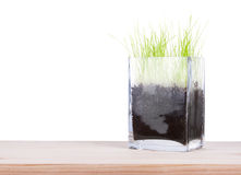 Glass vase with a young fresh green grass. On white background Stock Photo