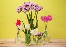 Glass vases with beautiful tulips royalty free stock photos