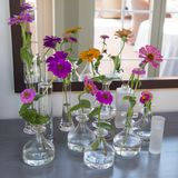 Flower arrangement, some colorful zinia in small glass vases Royalty Free Stock Images