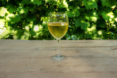 Glass of Vine with Grapevine in Background Royalty Free Stock Photography
